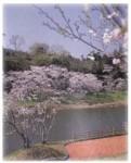 塘之池公園