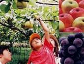 フルーツ狩り体験